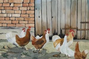 Federvieh  Glückliche Hühner  38 x 50 cm